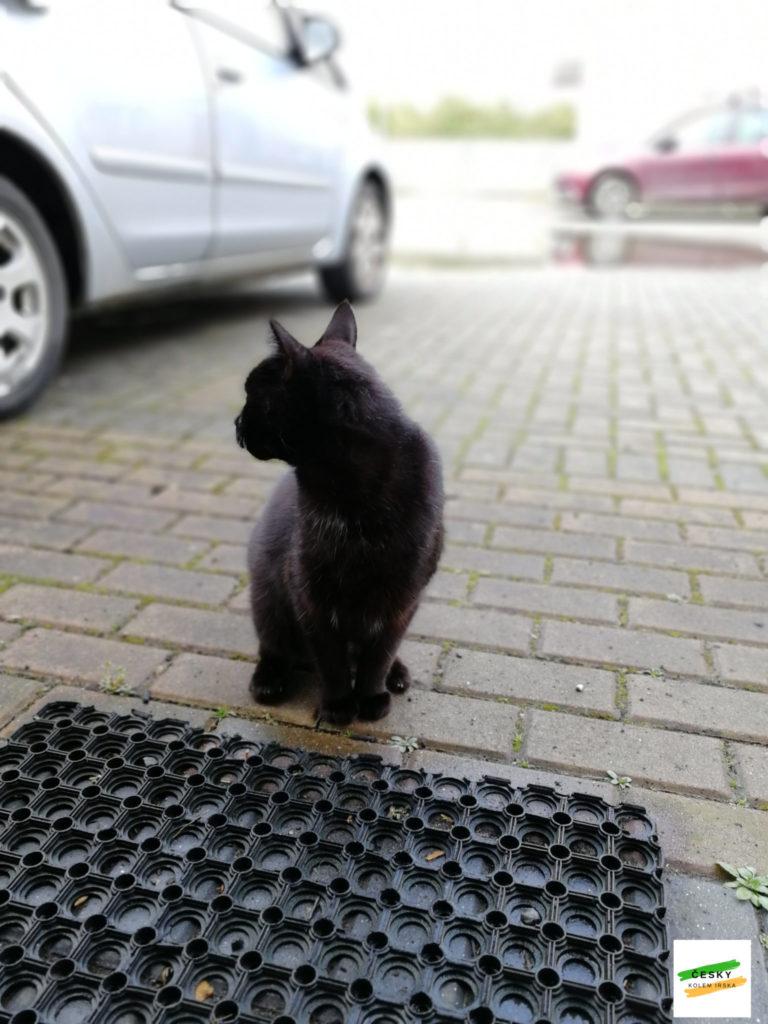 batman a stray cat