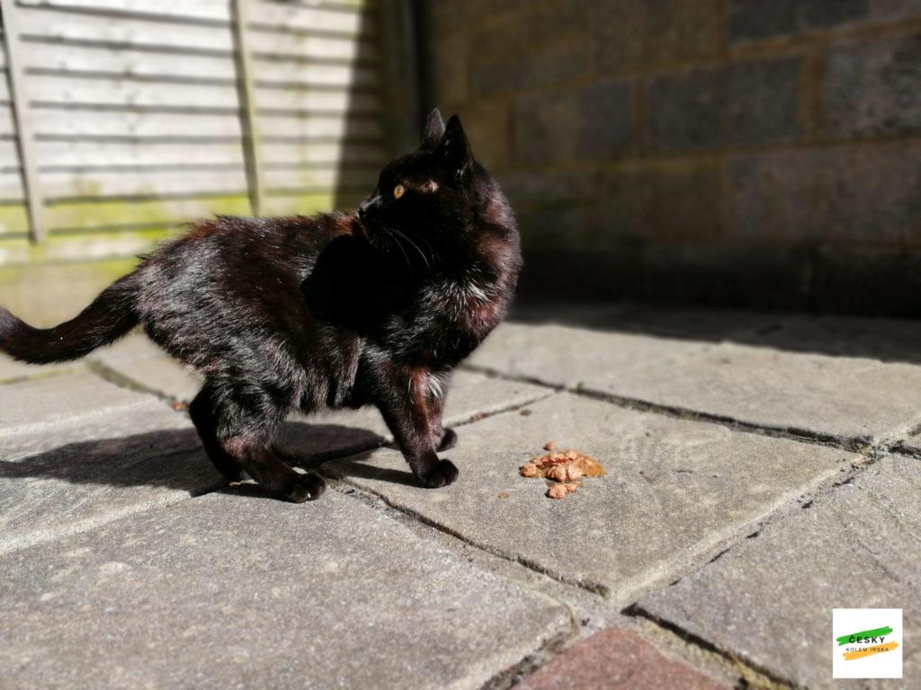 batman stray cat eating