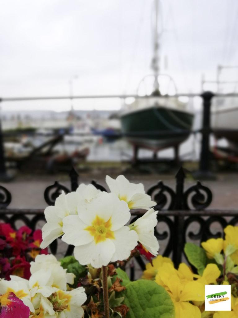 kytky v Cobhu